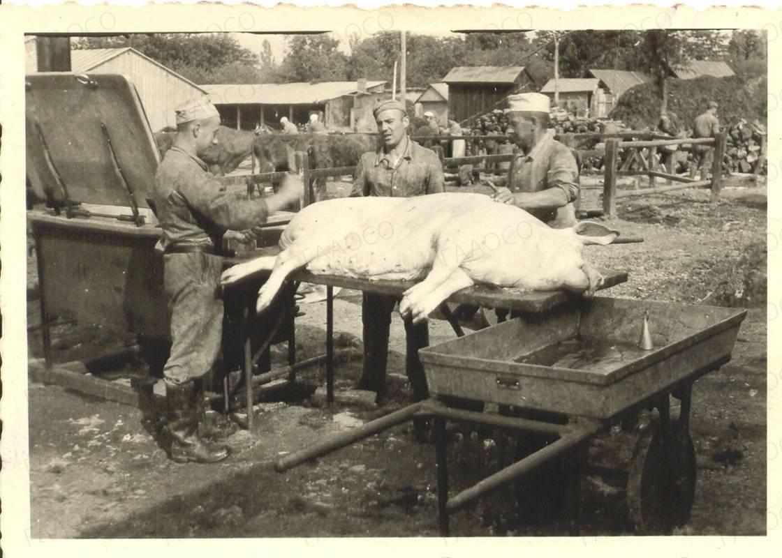 Убой скота немецкими захватчиками.